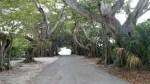 Banyan à Boca Grande