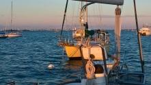 mooring_field_dinner_key_marina (6)