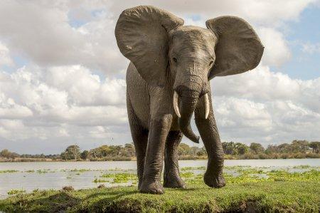 elephant_tanzania